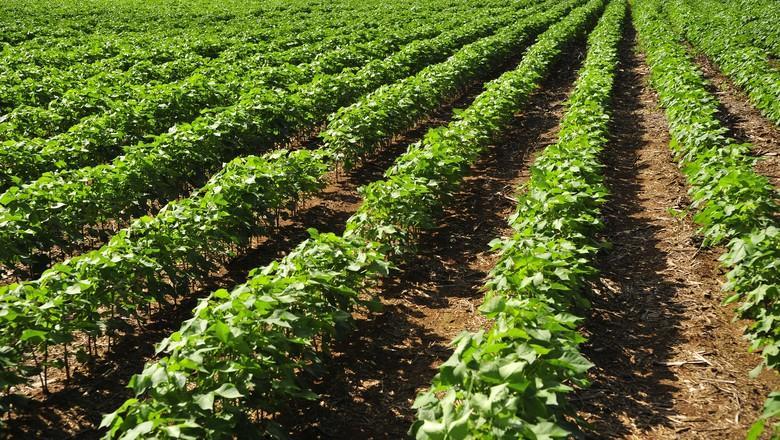 Demora da chuva atrapalha plantio de soja em Mato Grosso