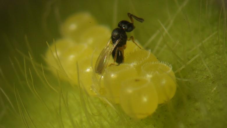 Inovação biotecnológica reduz custos de produção no campo