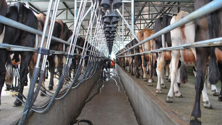 Preço ao produtor de leite fica praticamente estável em dezembro