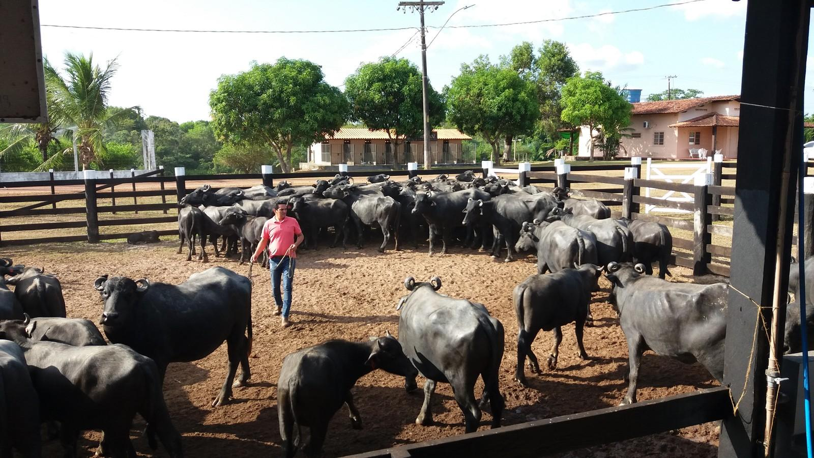 Censo Agro chega a 7,1 mil locais visitados e atinge o dobro da expectativa no Amapá