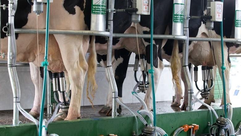 Preço do leite ao produtor tem segunda alta consecutiva